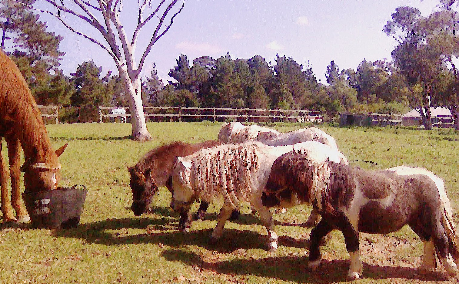 Ponies/minisandpoppy2.jpg
